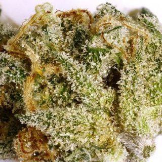 Buy Sage weed UK