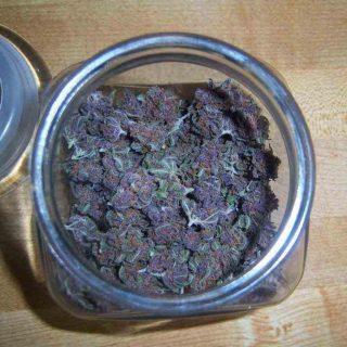 Buy Blueberry Widow strain UK
