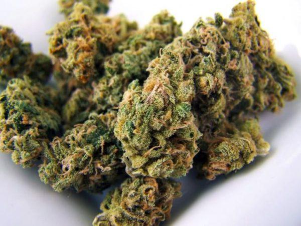 Buy Neville's Haze Weed UK