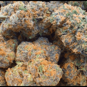 Fruity pebble strain UK