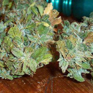 G13 Marijuana strain UK