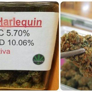 Buy harlequin weed UK