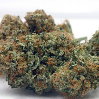 Ewok Marijuana Strain UK