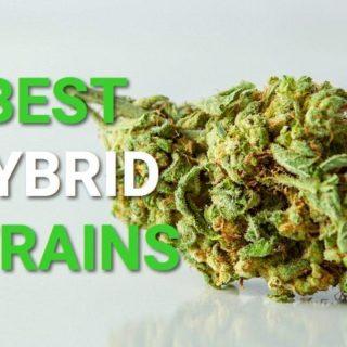 Hybrid Weed Strains UK