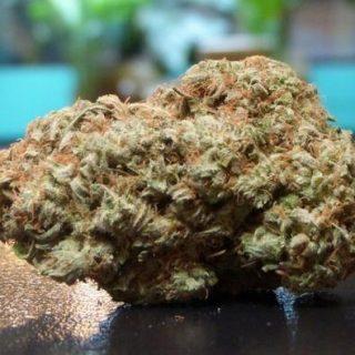 Buy Chocolope weed UK