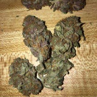 Buy Bay 11 weed UK