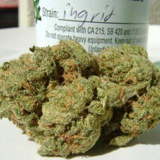 Buy Ingrid indica strains UK