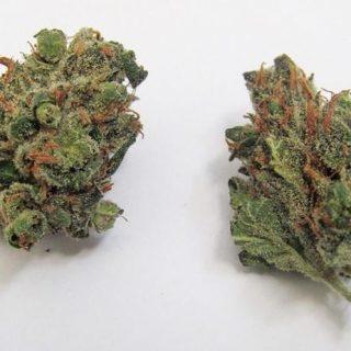 Buy Pez marijuana strain UK