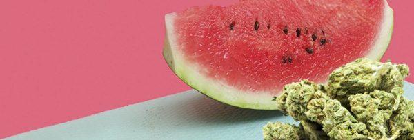 Watermelon Indica Weed Strain